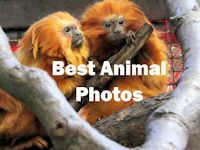 Best Animal Photos